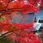 秋の京都旅 紅葉と国宝に合える一石二鳥な「お寺巡り」がおススメ!!